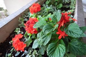 jardinieres-4